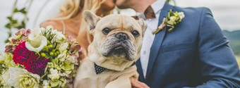 How To Involve Your Dog In Your Wedding