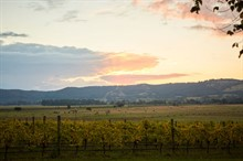 R Weddings | Yarra Valley Wedding | Yering Station View
