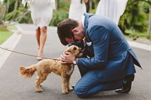 Beck Rocchi Photography | Melbourne Wedding | Dog