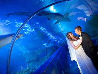 AQWA: A Unique Wedding Space Under The Sea!