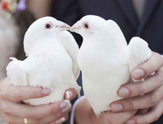 Enhance Your Wedding Ceremony With Shellharbour Dove Releases