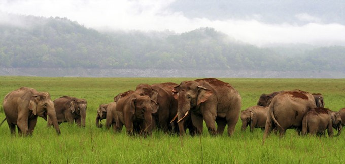 Incredible India | Honeymoon | Elephants