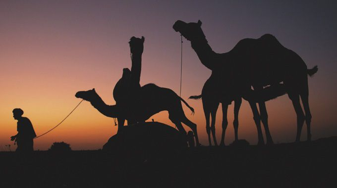 Incredible India | Honeymoon | Camel Ride