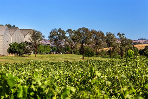 Bunnamagoo Wines | Wedding Venue | Country Wedding Venue